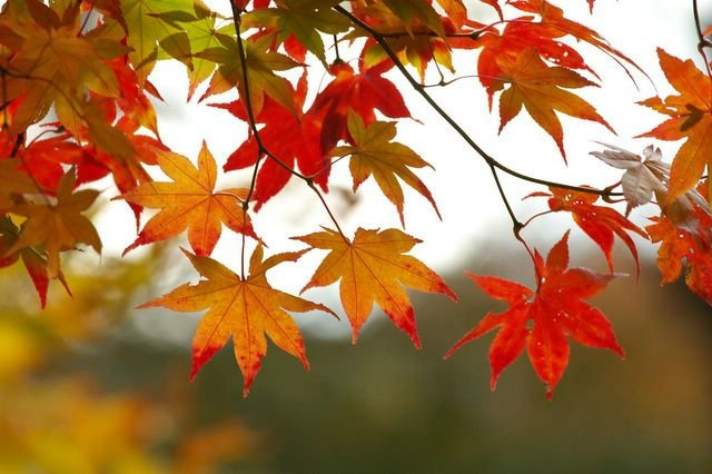 fall_leaves_1_